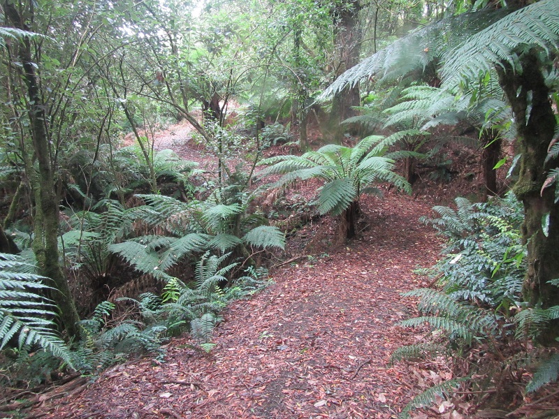 2 Photo Old Beechy Rail Trail Ditchley Gully 02 20150218