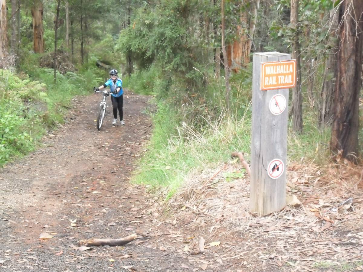 Trail near Knott's cutting