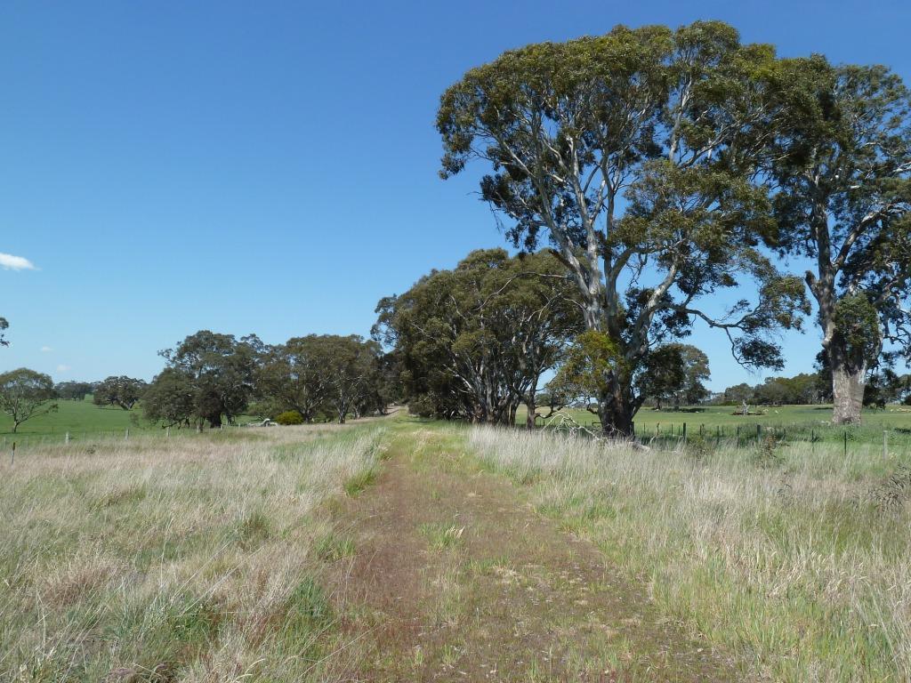 Between Macdonald's Rdand Glenelg Highway (2011)