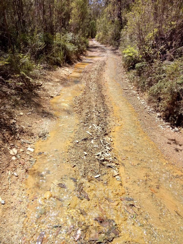 Trail near Melba Flats end (2019)