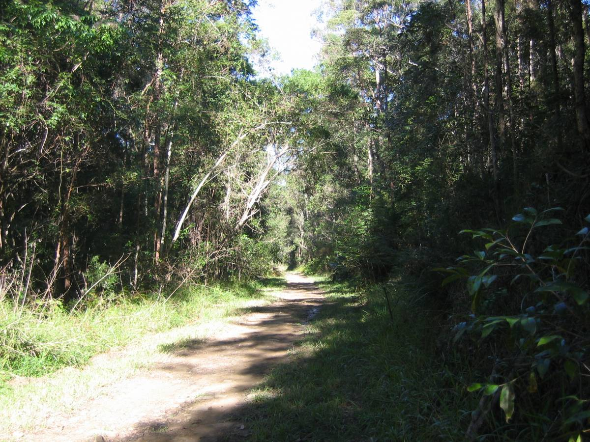 Landsborough Dularcha  just south of tunnel.
