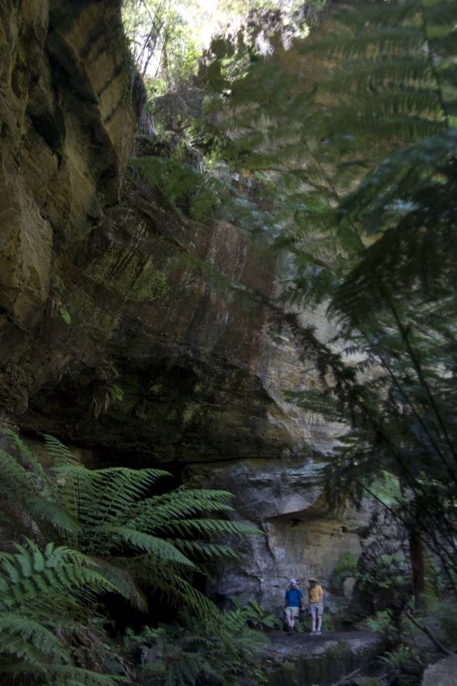 In the lush rainforest at the Newnes end of the Glow Worm tunnel. (2009)