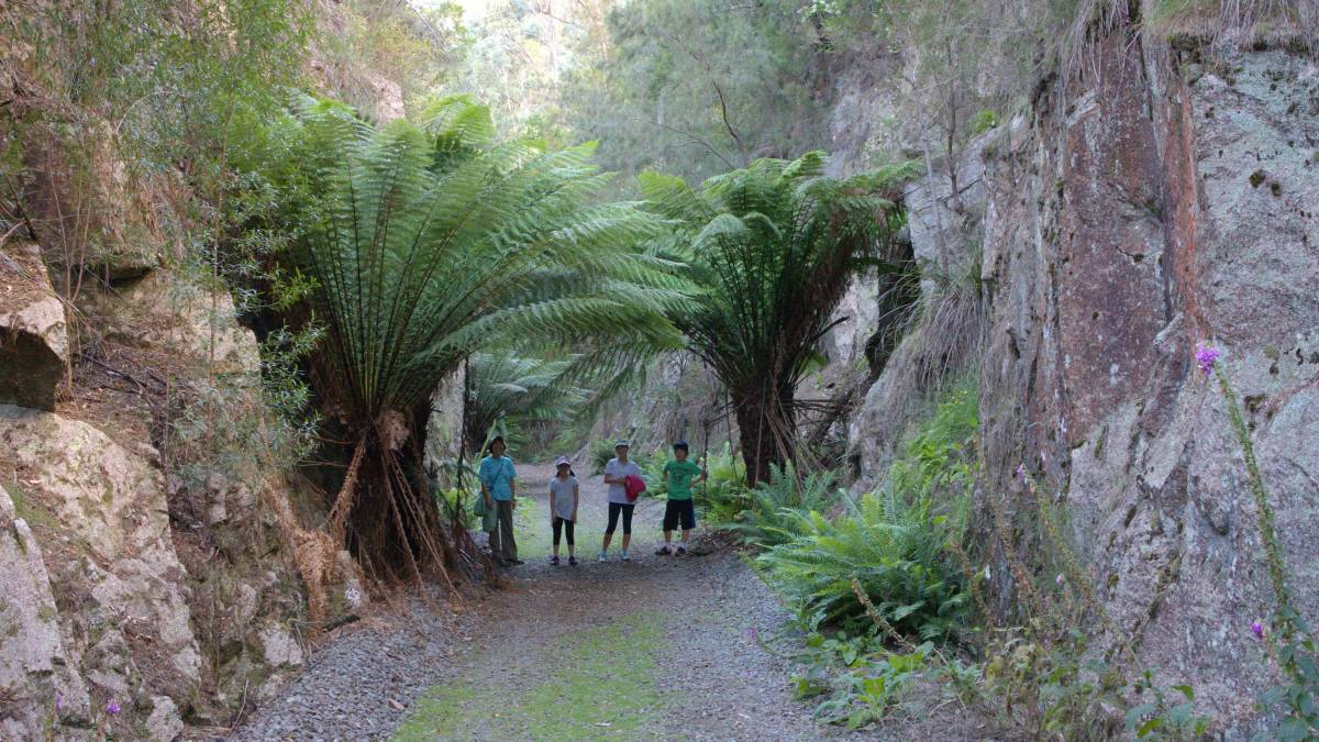 Huge cuttings and ferns abound between Tonganah and Tulendeena. 2014