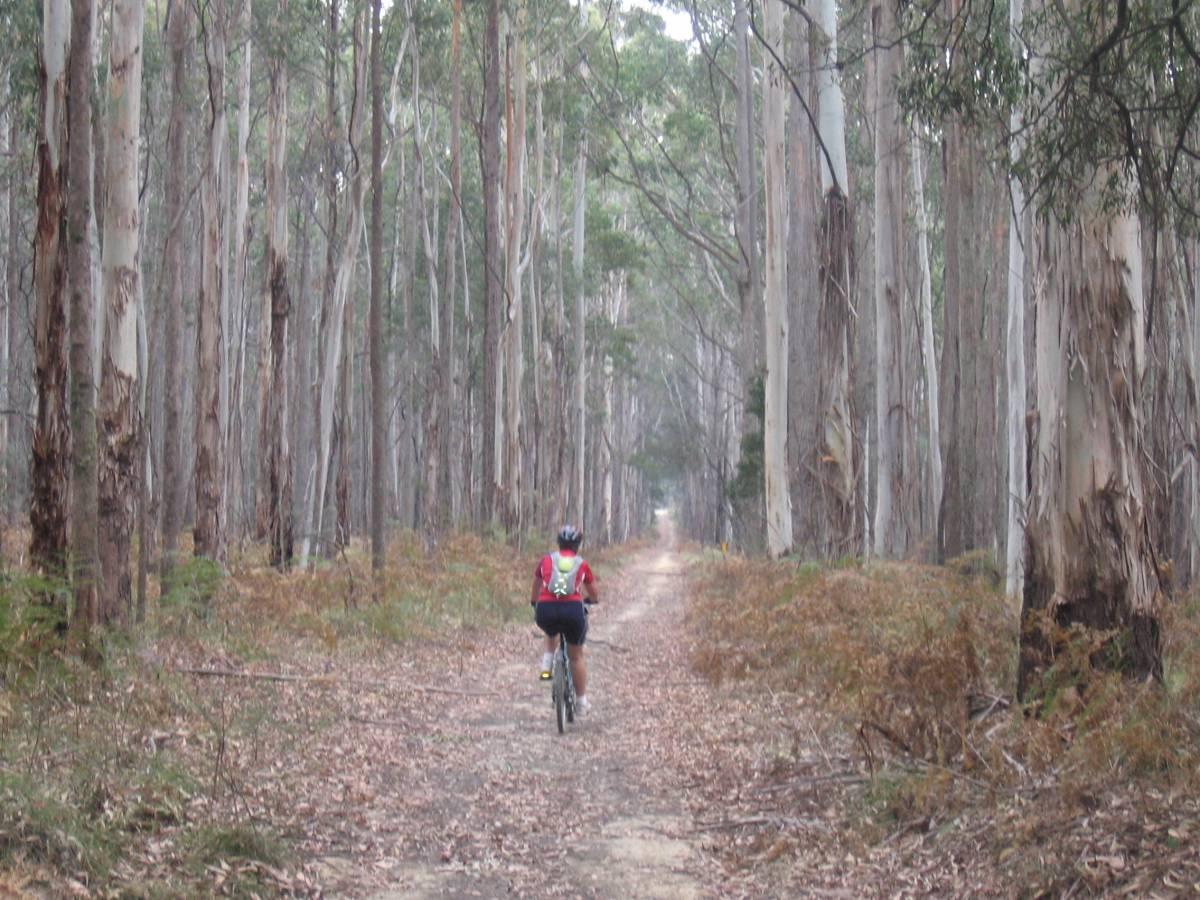 Leonards Hill to Wombat (2006)