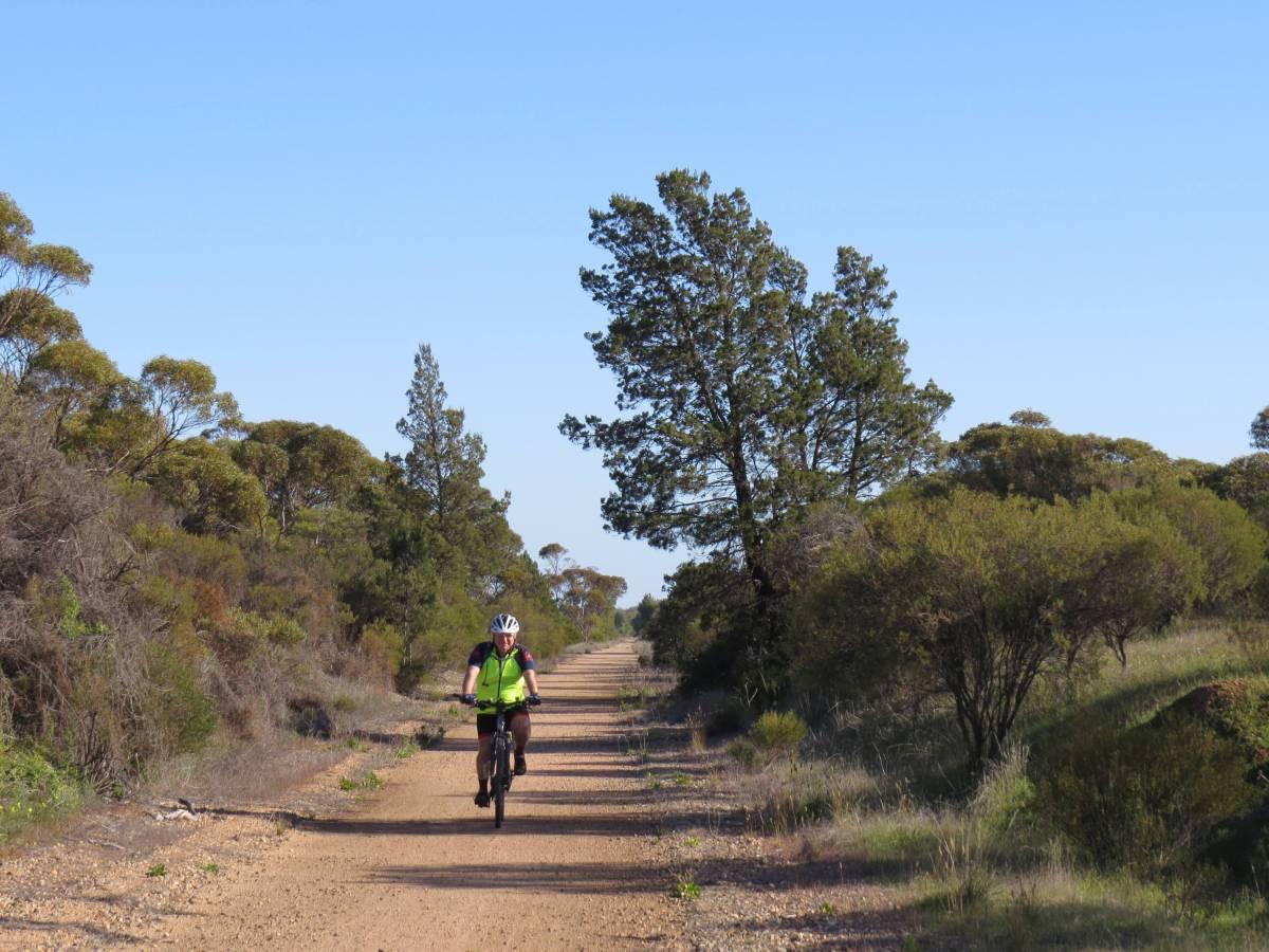 Typical path quality and vegetation along the Shamus Liptrot Rail Trail
