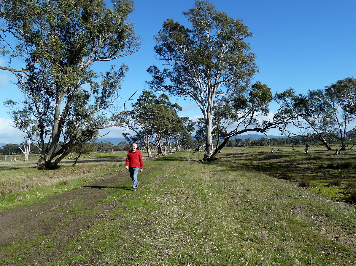 Towards Mt Dryden Rd with Grampians in background (2014)