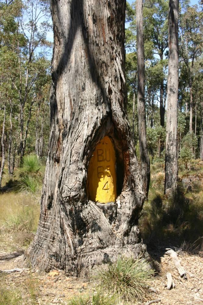A shield tree