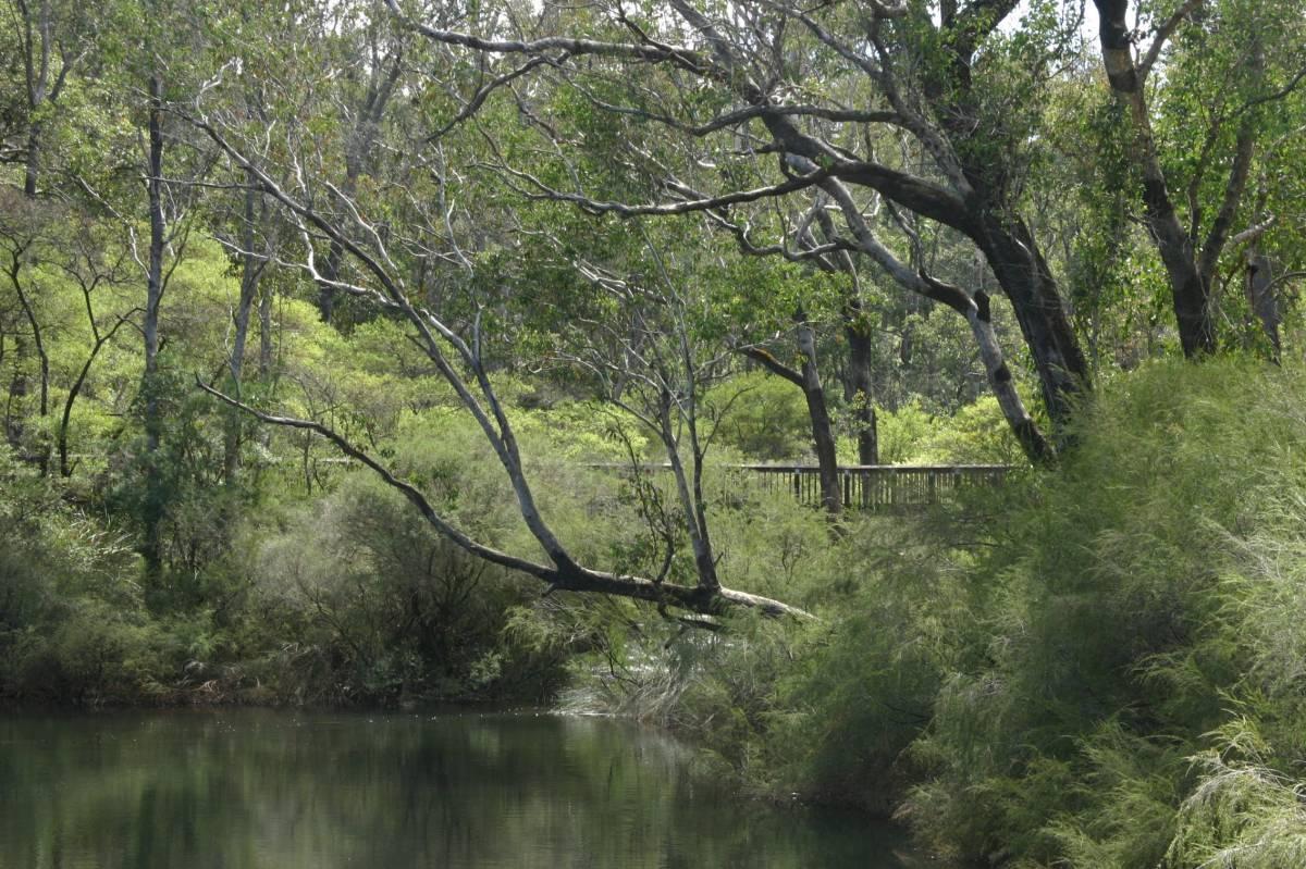 The trail crosses Barrabup Pool on the footbridge