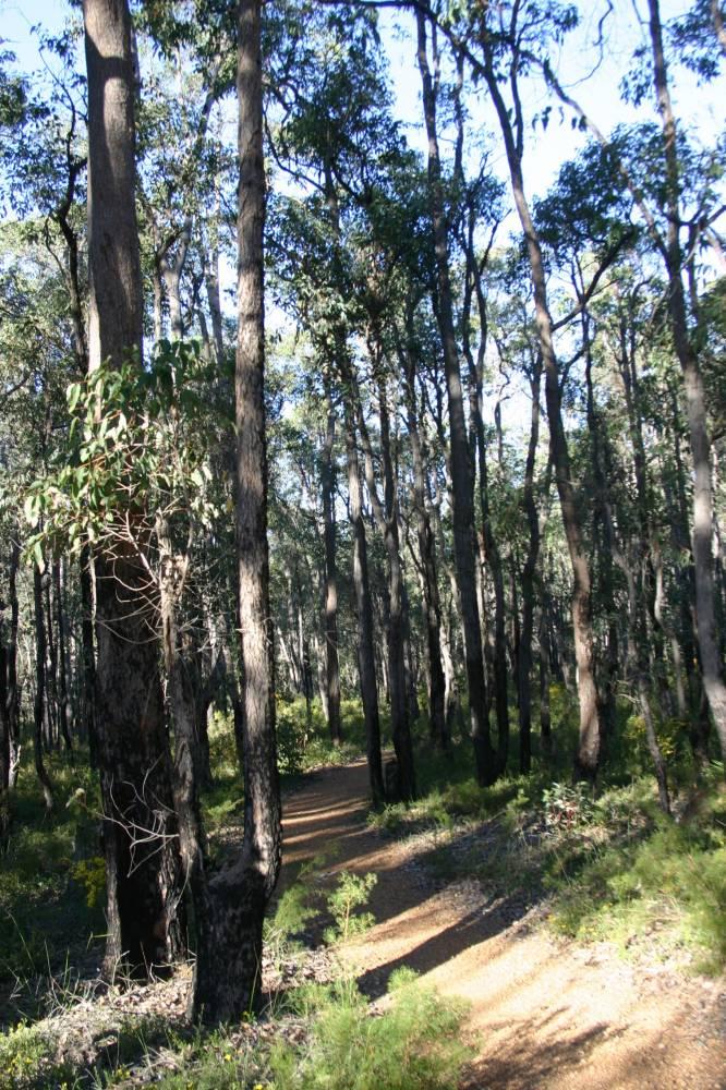 The Mundaring Weir Trail