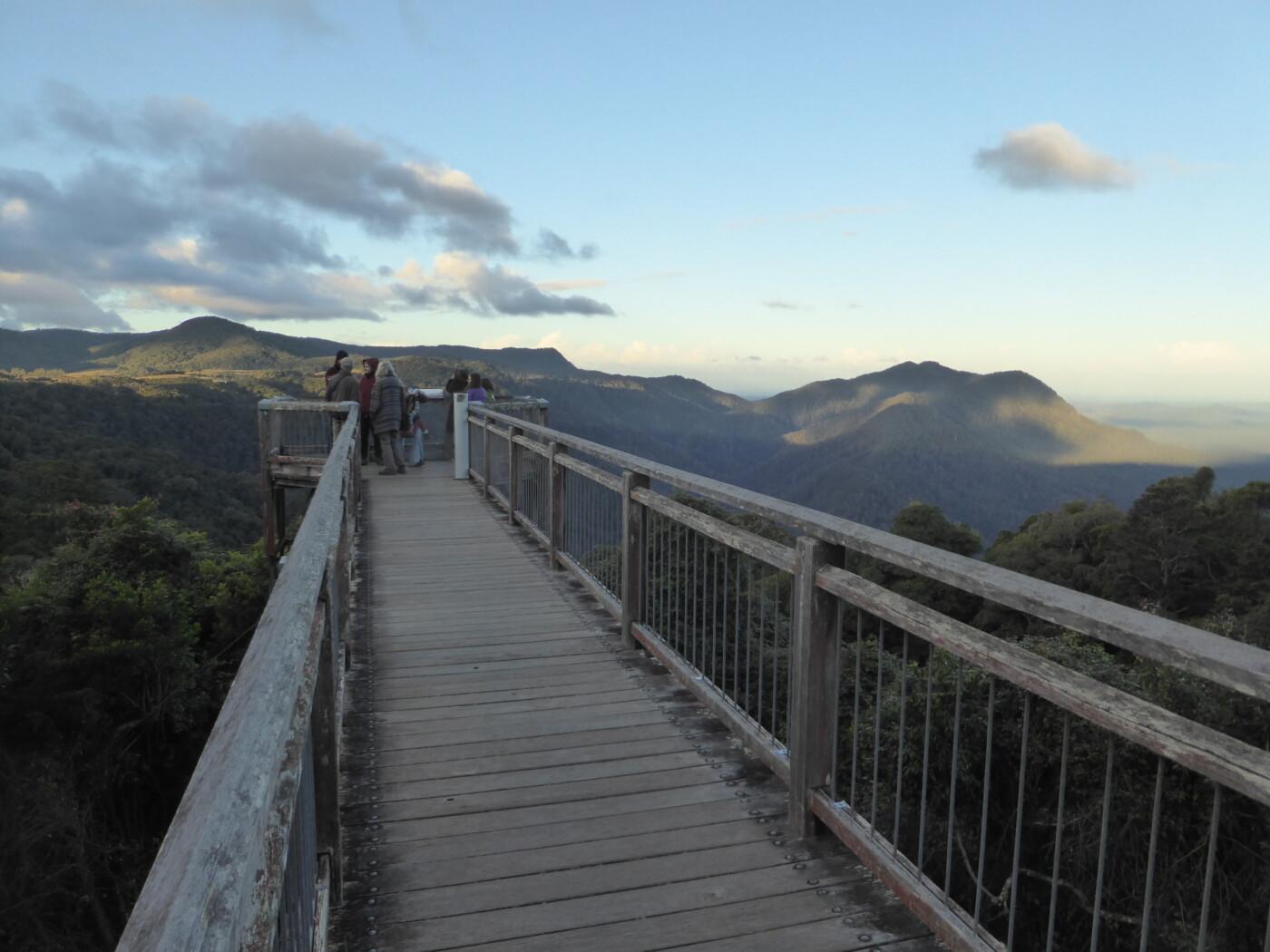 Dorrigo skywalk 2021