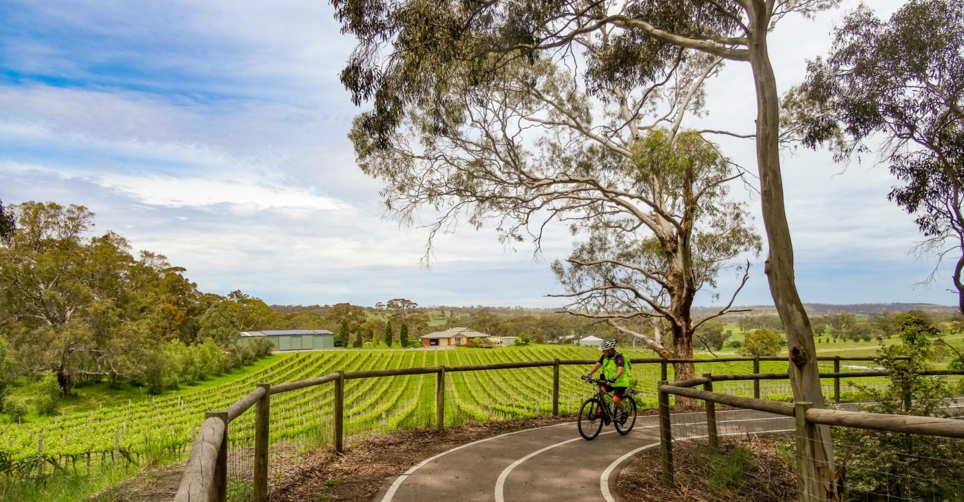 Vineyard on the approach to Onkaparinga Valley Road crossing [2020]