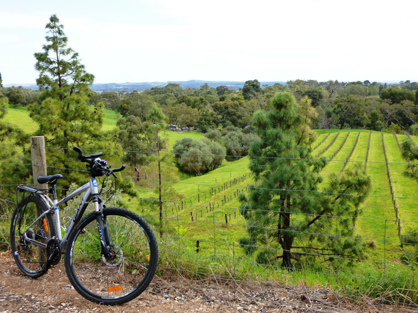 View from the rail trail near Angaston (2020)