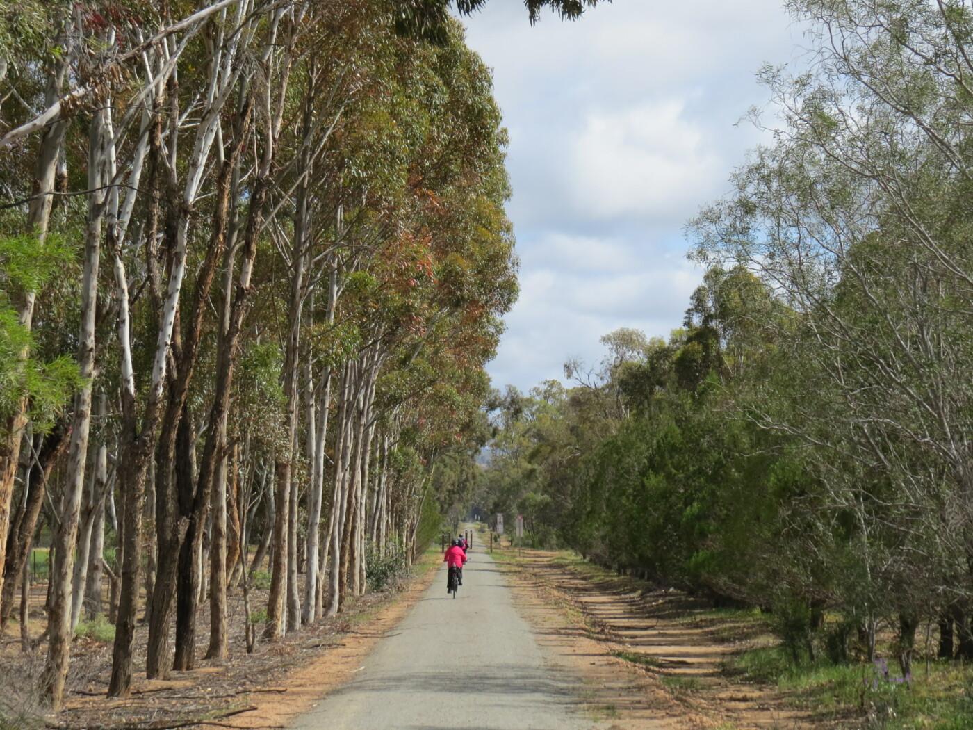 Willowie Forest