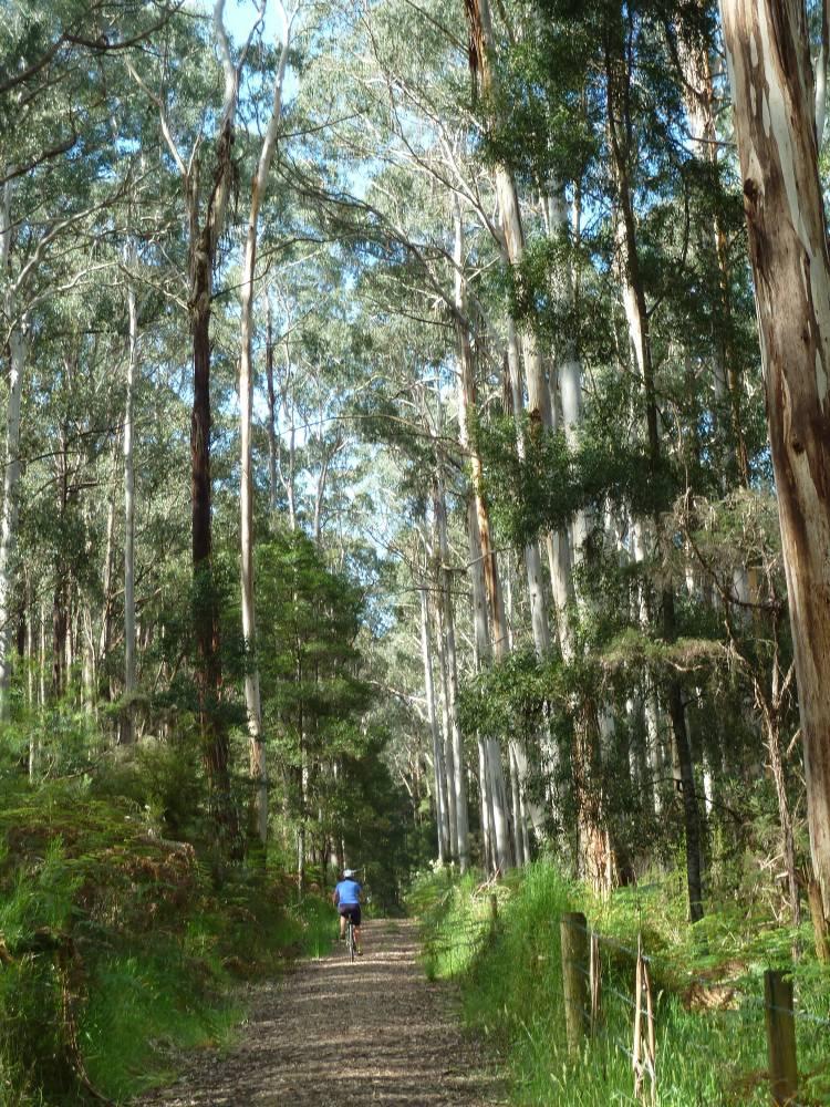 Enjoying the Yaugher Forest (2011)