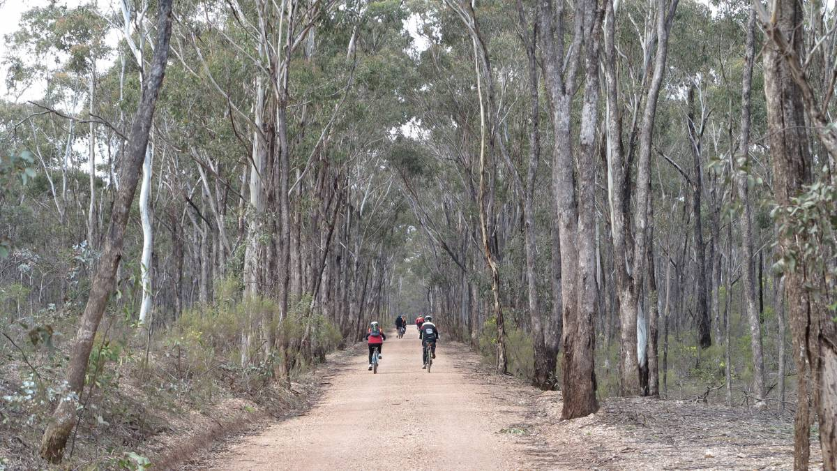 Forest scenery approaching Heathcote (2015)